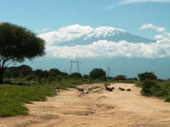 Msitu wa Tembo view