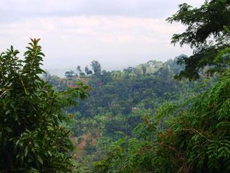 Materuni rainforest