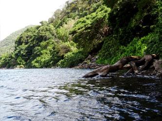 Nature du lac Chala