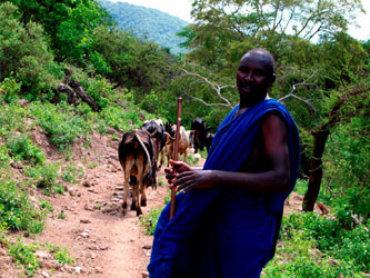 Maasai cattle hike