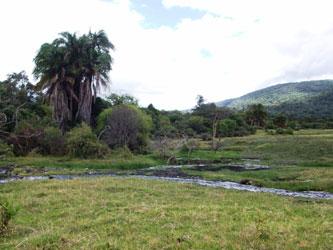 Safari Arusha National Park