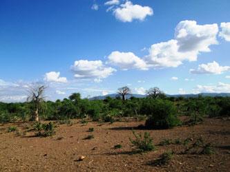 Kikuletwa Hotsprings surrounding area