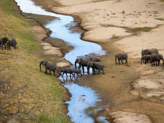 Elephants in the river of Tarangire