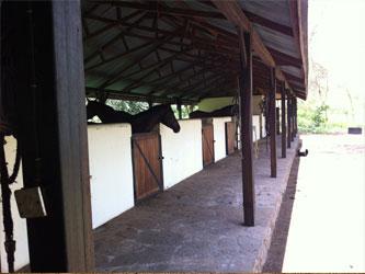 Establo caballos Tanzania