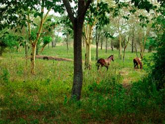 Granja caballos Tanzania