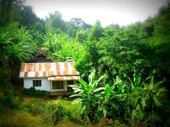 Campo de café Marangu