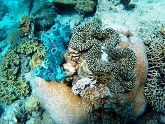 Ocean snorkeling Pangani