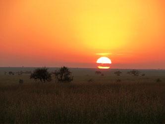Coucher de soleil africain sur le Serengeti