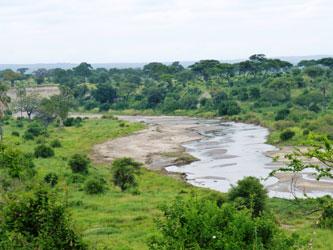 Vue du parc national de Tarangire